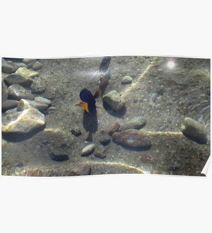 Fish at my Feet 4 Poster