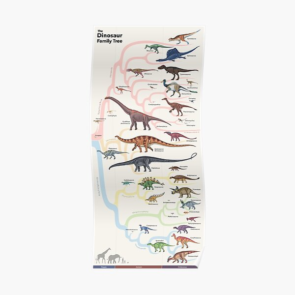 Dinosaur Family Tree Poster
