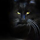 Chat Noir by Nick  Gill