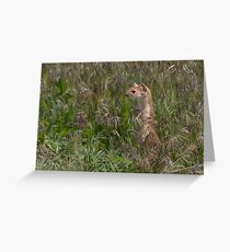 Long Tailed Weasel at Attention Greeting Card