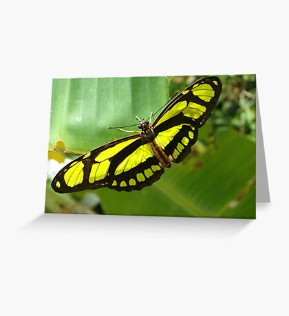 Green Malachite Butterfly Greeting Card
