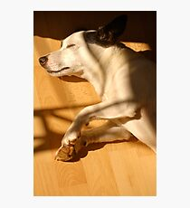 Let Sleeping Dogs Lie on the Laminate  Photographic Print