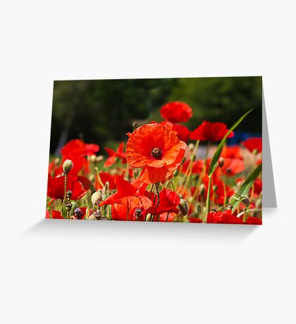 Nature Scape Poppies Greeting Card