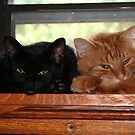 Boo and Opie by DebbieCHayes