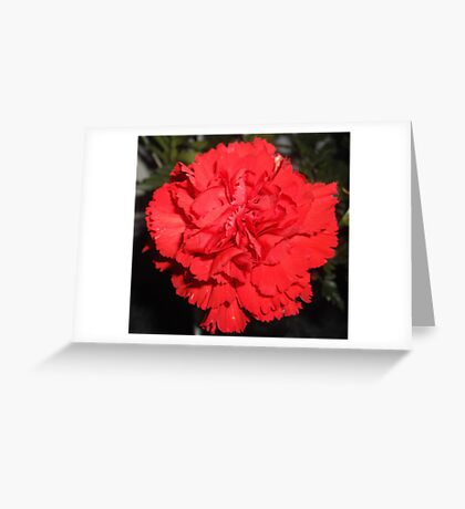 Red Carnation Greeting Card
