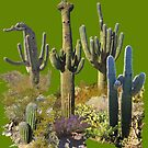 Giant Saguaros of the Sonoran Desert by James Lewis Hamilton