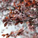 French Blossoms by Danika & Scott Bennett-McLeish