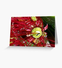 The floral cup of Pohutukawa Greeting Card