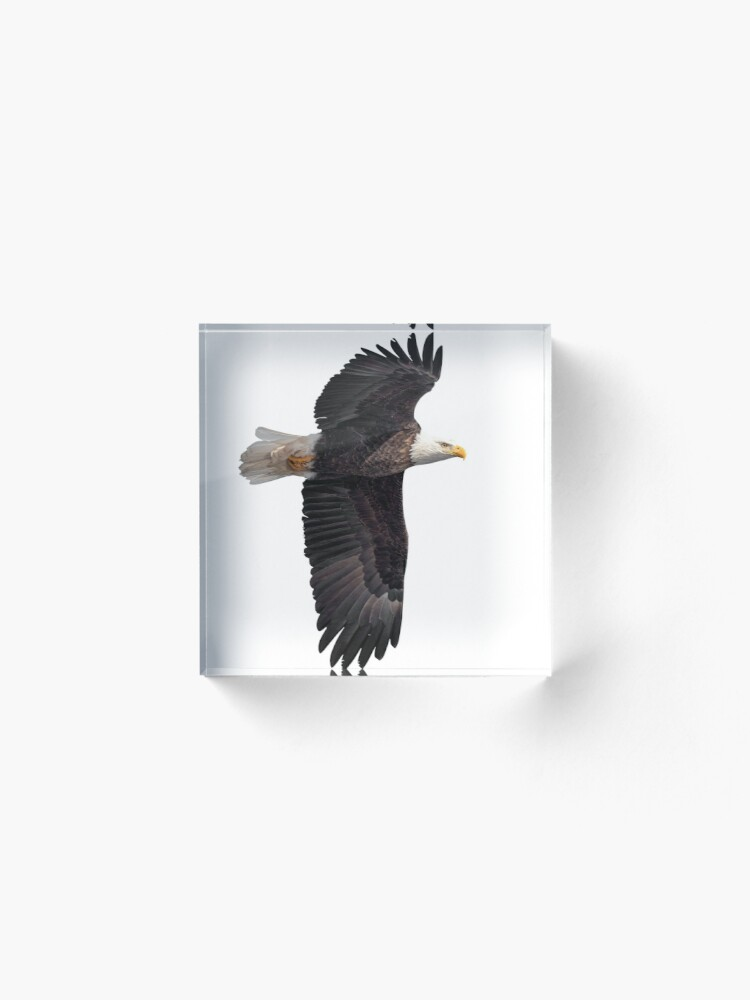 Alternate view of Isolated Bald Eagle 2019-7 Acrylic Block