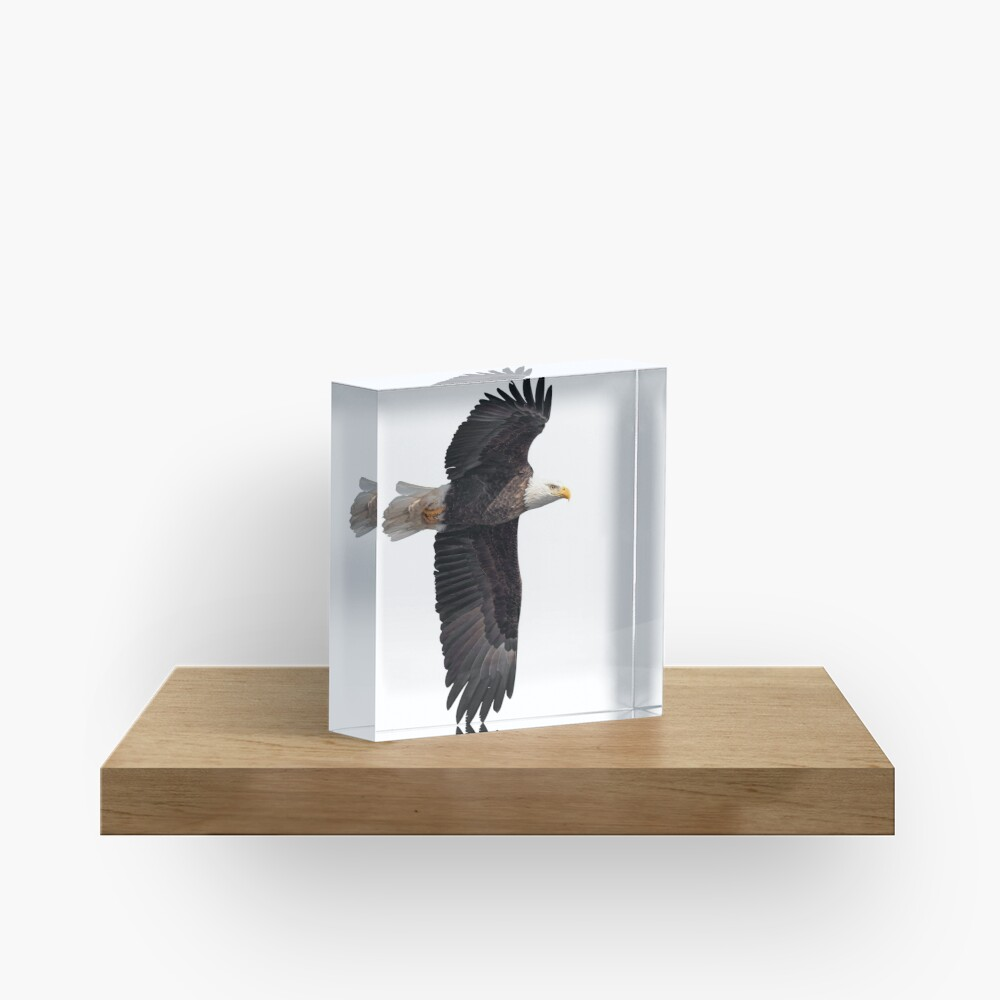 Isolated Bald Eagle 2019-7 Acrylic Block