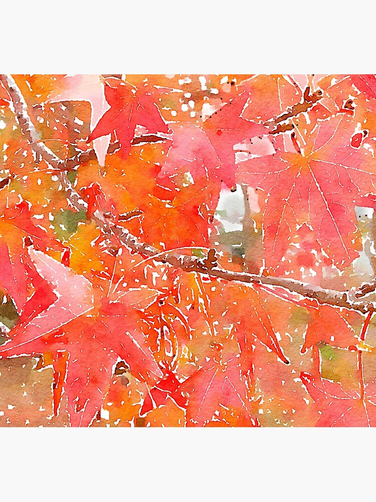 Liquidambar Leaves in Autumn by douglasewelch