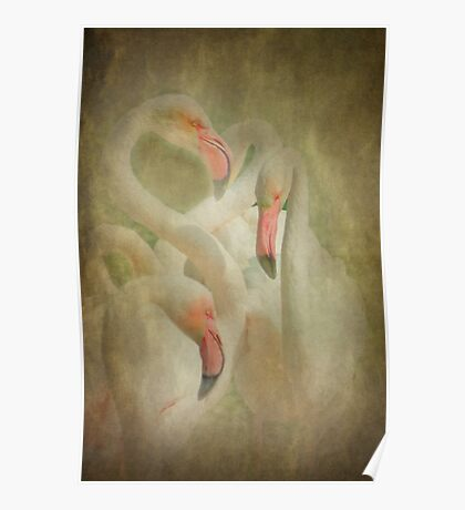 Flamingo's in Pastel Poster