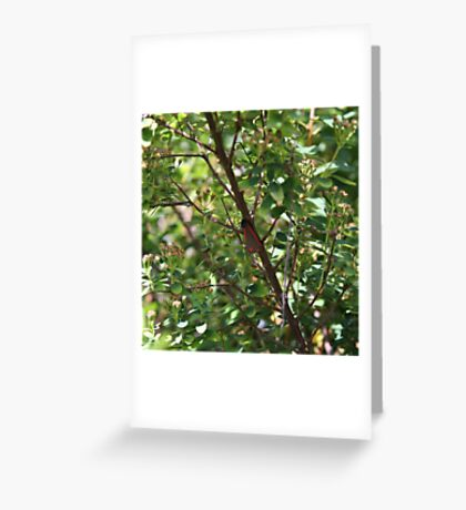 RED AND BLACK MOTH  Greeting Card