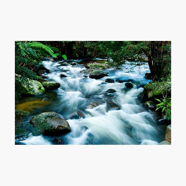 Serenity in the bush Photographic Print