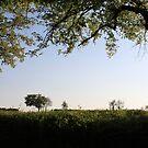 Fairytale Field by Danika & Scott Bennett-McLeish