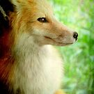 This is my best side!!!...White Tailed Fox © by Dawn Becker