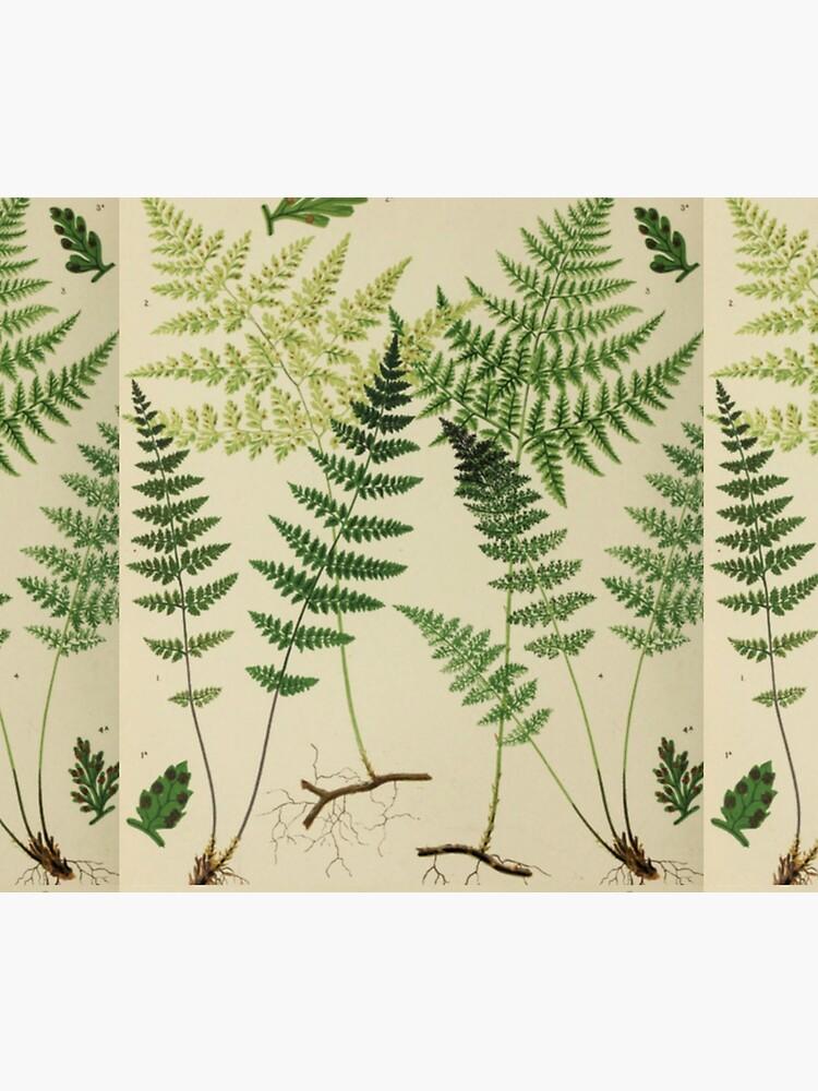Botanical Ferns by bluespecsstudio
