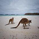 Lucky Bay - Cape LeGrande - West Australia by Chris Paddick