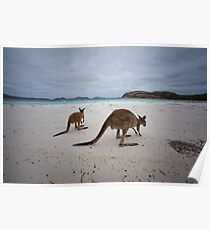 Lucky Bay - Cape LeGrande - West Australia Poster
