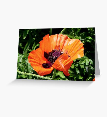 Pretty Poppy... ©  Greeting Card