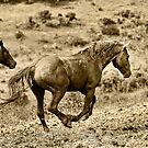 Wild Stallion by Sue Ratcliffe