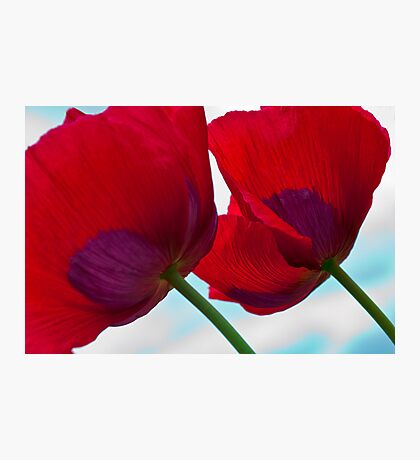Big Red Poppies Photographic Print