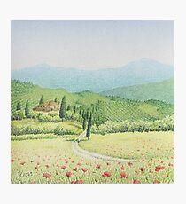 Tuscan Vineyard, Tuscany, Italy Photographic Print