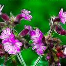 Pink Campion Fantasia by BizziLizzy