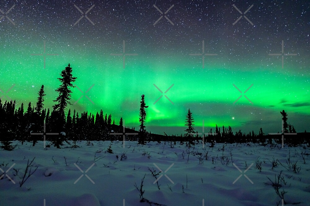 Boreal Forest Under the Aurora by Aaron Lojewski