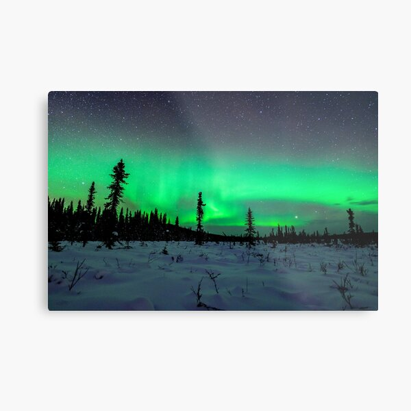 Boreal Forest Under the Aurora Metal Print