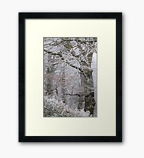 Icy tracery Framed Print