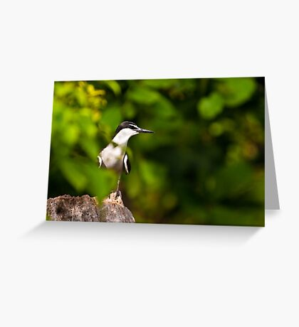 A Wary Tern Greeting Card