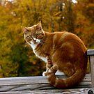 """Abbey early autumn by Alexa """"Lexi"""" Platts"""