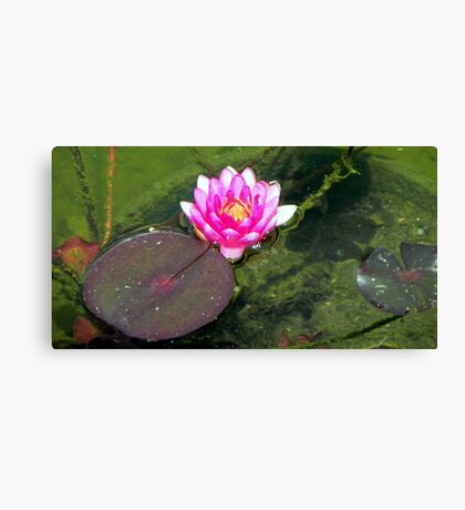 Water Lily © Canvas Print