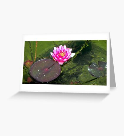 Water Lily © Greeting Card
