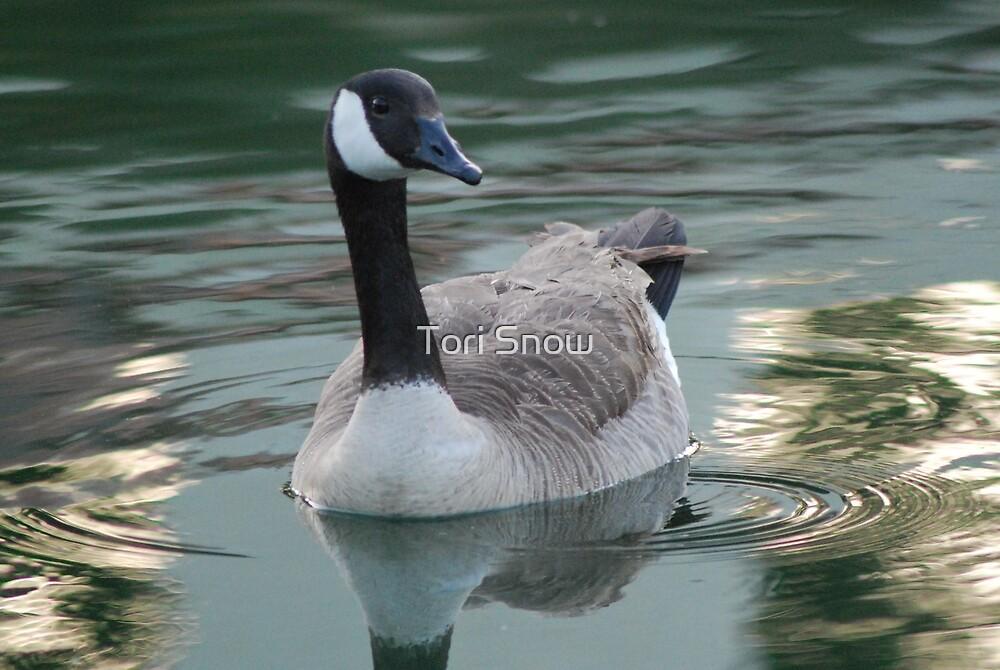 Canada Goose by Tori Snow