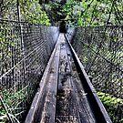 Suspension Bridge - Beedlup Falls WA by Bev Woodman