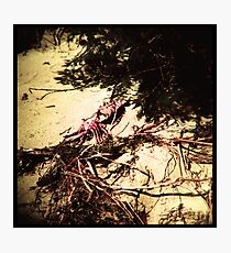 Dead things #01 Photographic Print