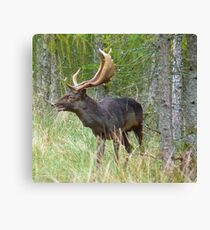 old golden antlers Canvas Print