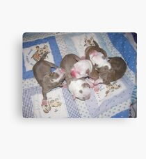 Precious Newborns Canvas Print