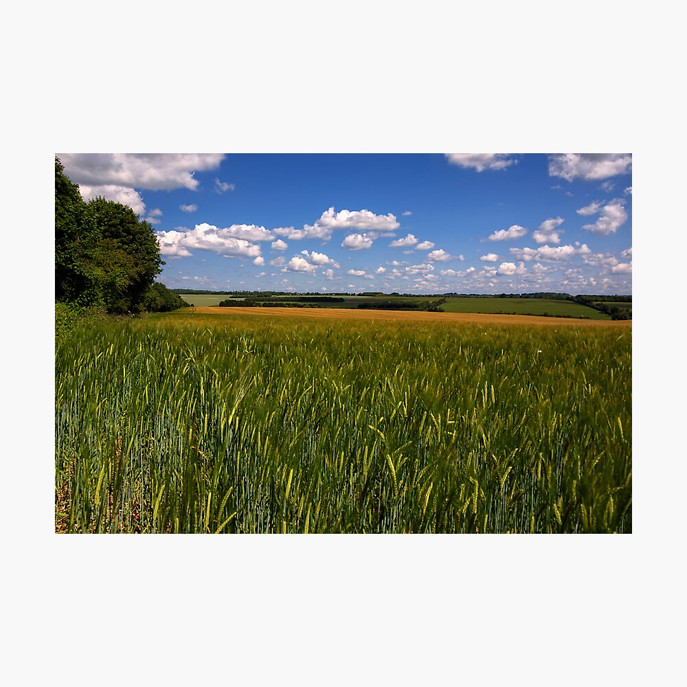 Barley near Winchester, UK Photographic Print
