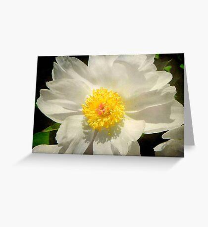 Purity © Greeting Card