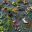 specimens by evon ski
