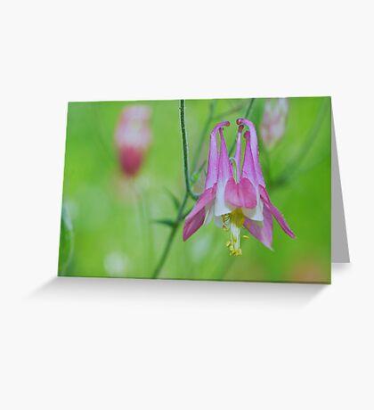 Pretty Pink Columbine Flower Greeting Card