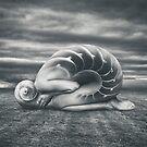 She shell by Simon Siwak