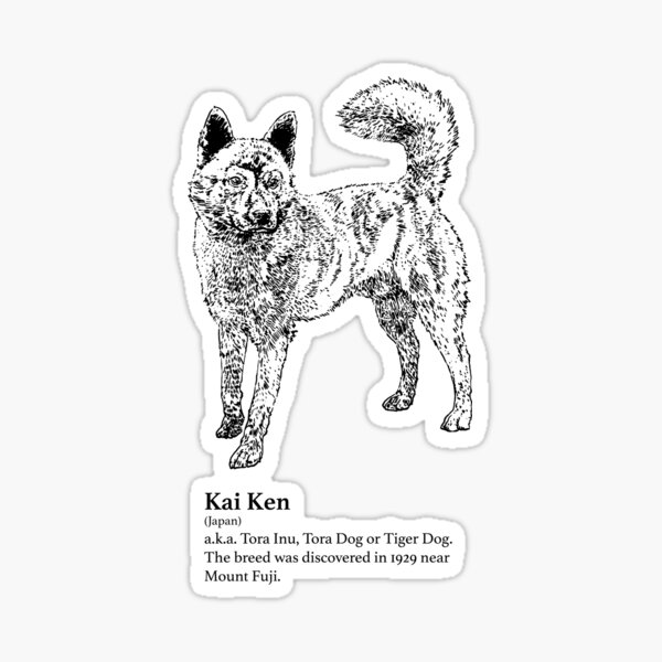 Kai Ken Sticker