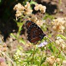 Monarch by TxGimGim