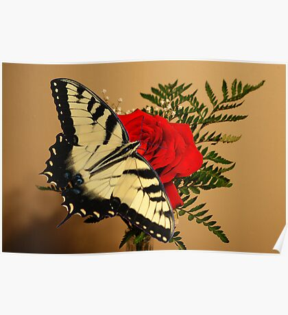 Butterfly Rose Poster