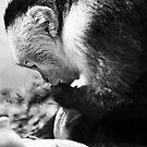 Hello, Mr. Monkey.  by rhysharper
