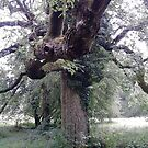 Knotted tree, Stroud by Alexandria Mia Simmons